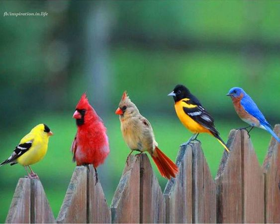 five different colored birds standing on a fence