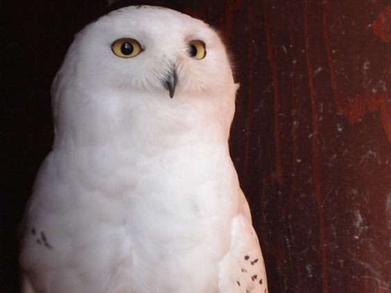 i want my own hedwig :)