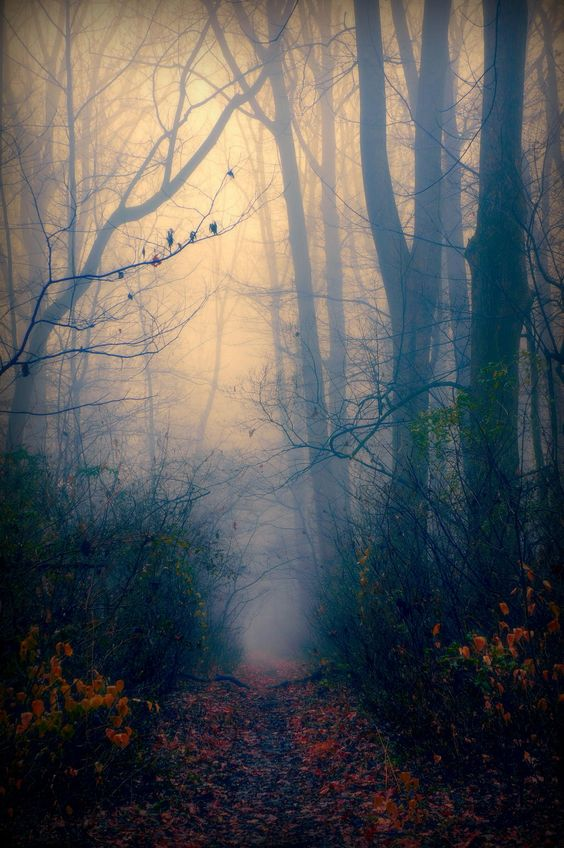 ghostly ƒσяєѕт path