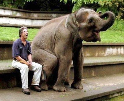doing this. seems fun.: Funny Animals, Animal Pictures, Adorable Animals, Beautiful Animals, Elephant Pictures, Animals I, Beautiful Elephants, Civilized Elephants, Elephants 4Always
