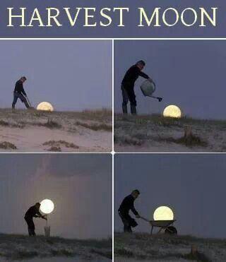 Harvest Moon ~ 9-20-13