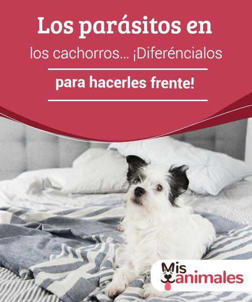enfermedades comunes del perro y parásitos
