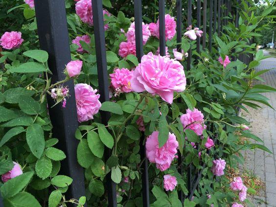 Еще кусты с цветами