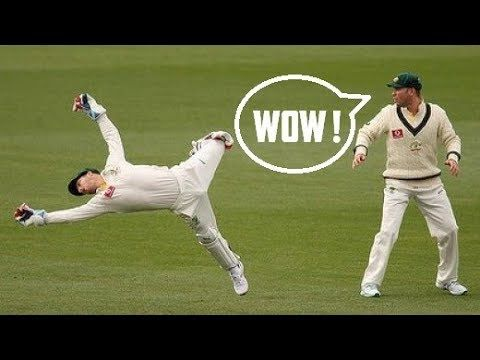 Best Wicket Keeper Catches Ever In Cricket History Cricket Wicket Crickets Funny