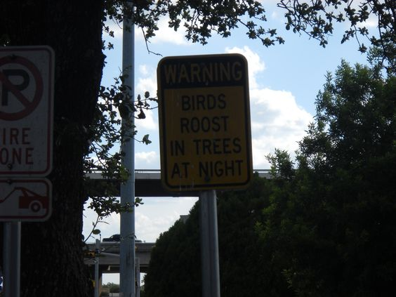 "Austin, TX - ""Birds roost in trees at night"""