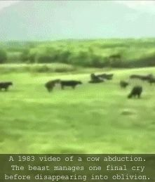 Maybe Mars needs beef. | The 20 Most Eerily Convincing Paranormal Videos on YouTube | Cracked.com