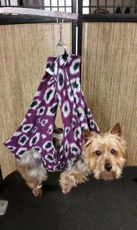 Dog Grooming Harness Cradle