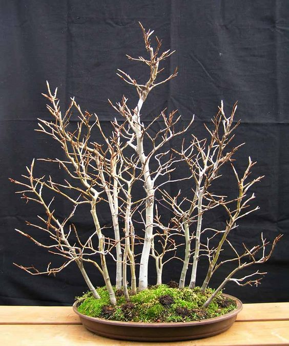 Bonsai string of lights and centerpieces on pinterest