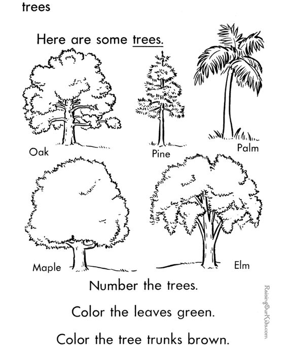 Trees Coloring Page To Print And Color Preschool Tree Kindergarten Tree Coloring Page