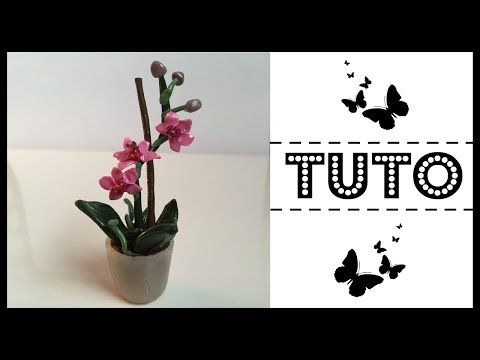 how to: miniature orchid