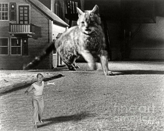 Grant Williams runs for his life from a cat in the science fiction classic THE INCREDIBLE SHRINKING MAN (1957). Bizarre Los Angeles