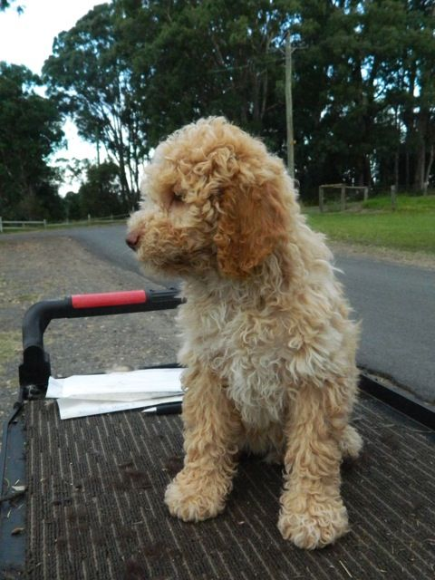 A Small Kennel Located In Westbury Tasmania All Our Dogs Are Part