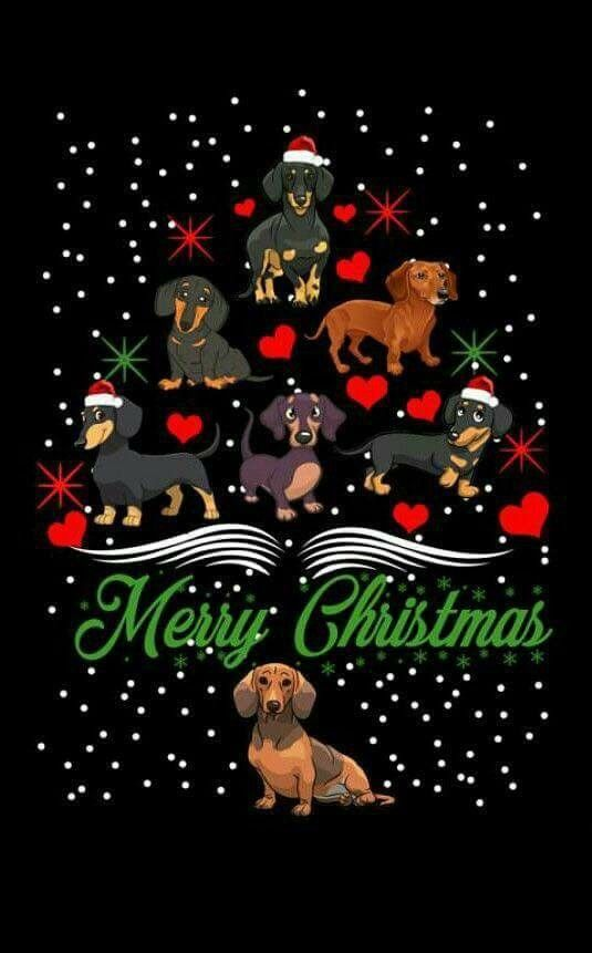 Pin By Jacqueline Coucke On Dachshunds Precious Babies Dachshund Christmas Christmas Animals Dachshund Love