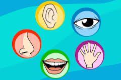 Resultado de imagem para atividades sobre os 5 sentidos no jardim de infancia