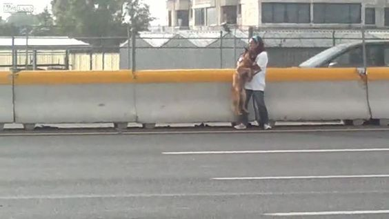 Watch this woman rescue a terrified dog from the side of a busy highway...so, so dangerous... INCREDIBLE video!