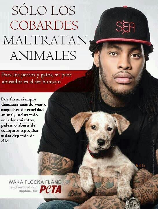 No al maltrato animal. Denuncia! #derechoanimal #fb
