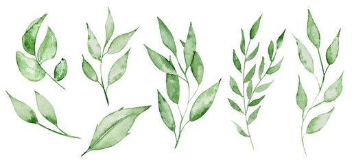 Watercolor Green Leaves And Brunches Greenery Herb Hand Rawn