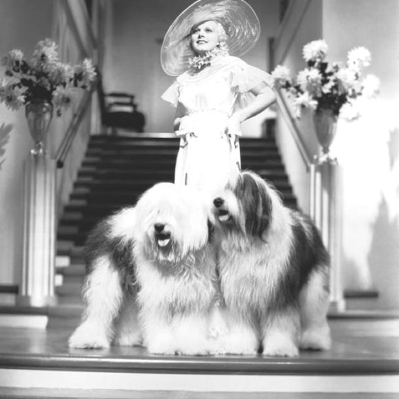 Carole Lombard had Sheedogs:
