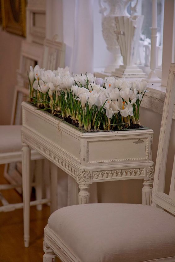 indoor gardening tulips planter