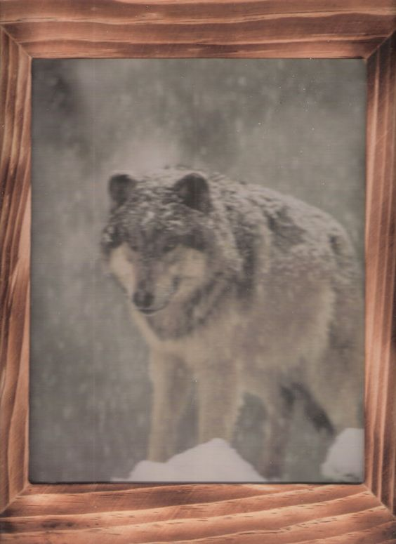 This wolf don't look all that happy in the snow  w/ free shipping in the continental USA by OldTimeCountryCrafts, $9.50