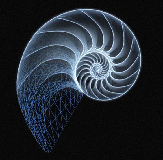 the chambered nautilus pdf