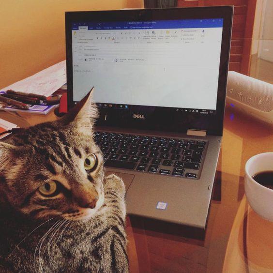 仕事やなにか作業を始めた途端、スリスリと寄ってきたり邪魔をしてきたりするニャンコっていますよね! そこで今回は、Instagramのハッシュタグ「#猫あるある」で見つけた飼い主さんを邪魔しちゃうかわいいニャンコたちを紹介!