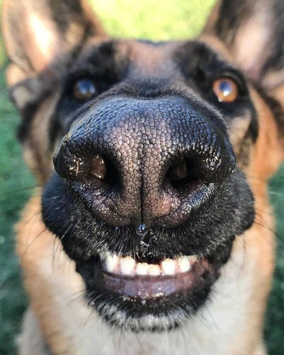 10 Times Dogs Woke Up In The Most Hilarious Ways Videos Dogtime Funny Dogs Dogs German Shepherd Dogs
