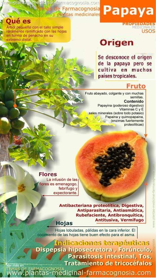 Yahweh Es Nuestro Alfarero Dejate Moldear Por El Plantas Y Remedios Caseros Medicinal En 2020 Beneficios De La Papaya Frutas Y Verduras Beneficios Hierbas Curativas