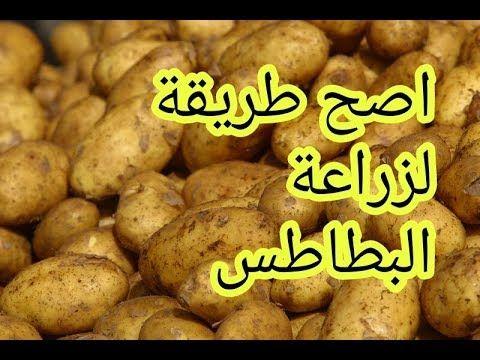 زراعة البطاطس في السطح بالتفصيل الممل Youtube Vegetables Beans Food
