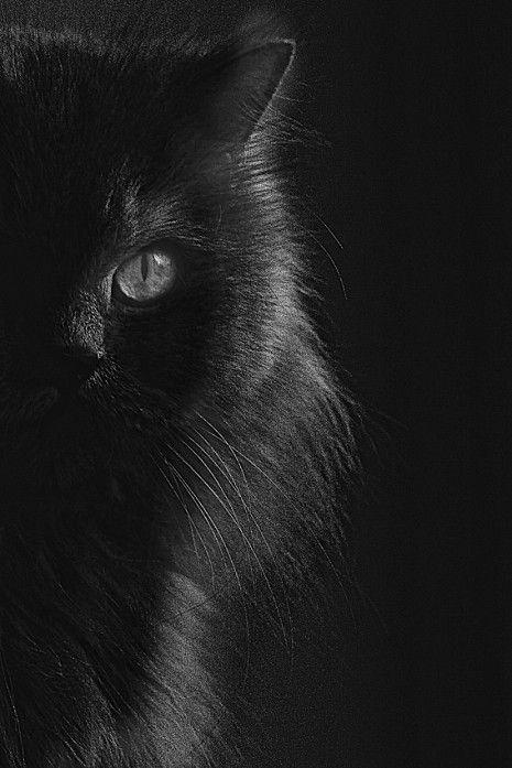 Black Cat: