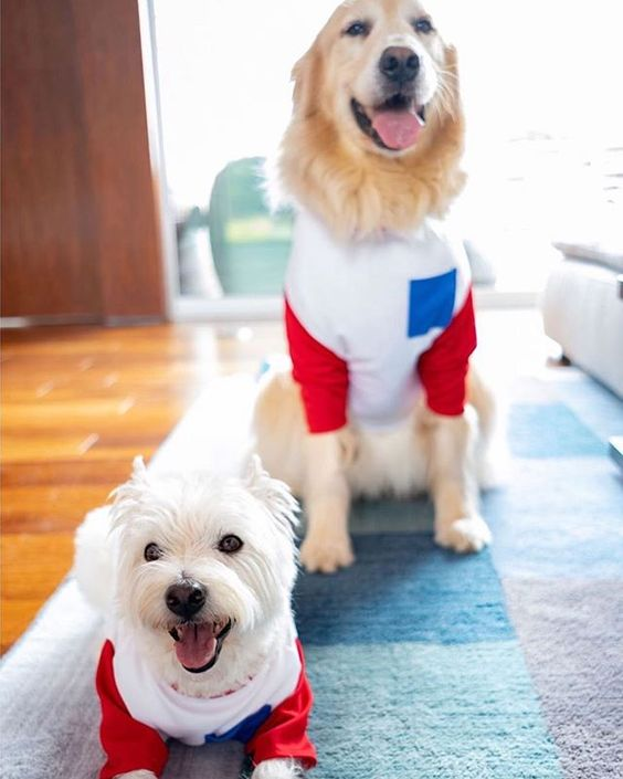Red, white, & blue baseball tees for dogs. #whoworeitbetter #adorable