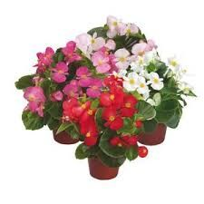 Resultado de imagen de flores en macetas