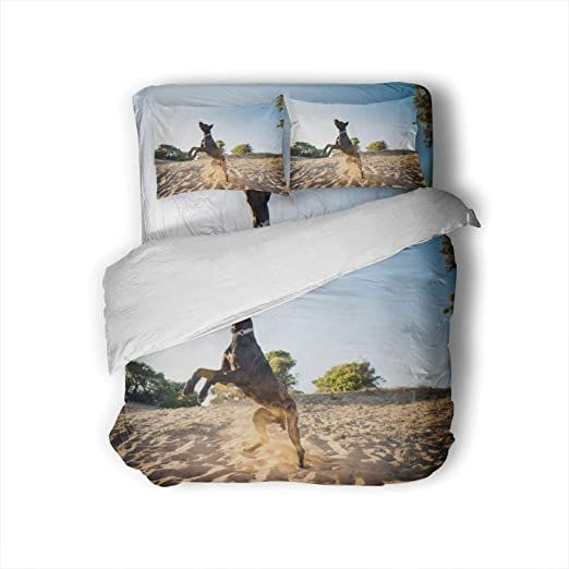C Coaballa Great Dane Pets Duvet Cover 4 Piece Comfy 3d Print Dog Decorative 4 Piece Bedding Set With 2 Pillow Shams King In 2020 Bedding Set Duvet Covers Pillow Shams