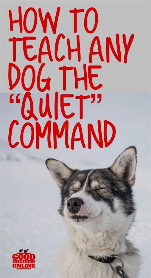 Total Recall Dog Training Hugo Mn Dog Training Shock Dog
