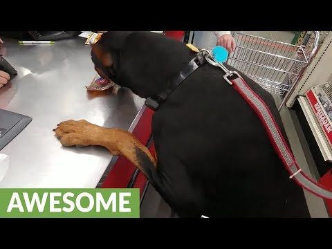 Doberman Picks Out His Own Treat Brings It To Cashier Youtube