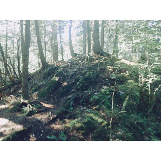 Owl's Ridge