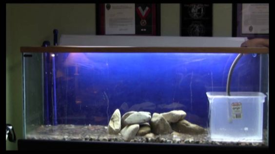 Setting up my 90 Gallon Fish Tank