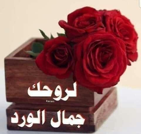 Pin By نهر الجمال On تعليقات وردود فيس بوك Rose Plants Flowers