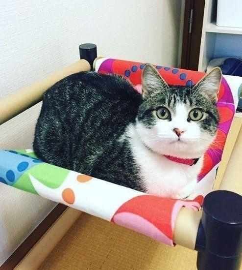 超優秀 100円ショップ セリア の商品で作る 猫用ハンモック ねこのきもちweb Magazine 猫 ハンモック 手作り 猫のハンモック 猫