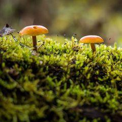 3 mushrooms