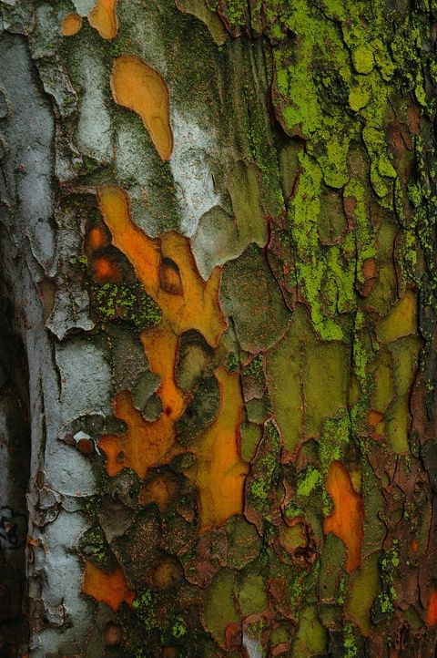 Bark: orange, red, green, white, brown
