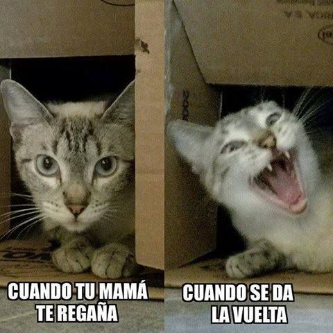 Pin On Funny Stuff Funny Memes Funny Spanish Memes Cute Memes