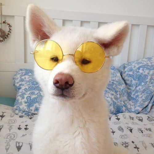 Animal Animals Glasses Friends Dog Puppy Cute Tumblr Https Weheartit Com Entry 301158945 Context Page 160 Context Type Exp Cute Animals Dogs Animals