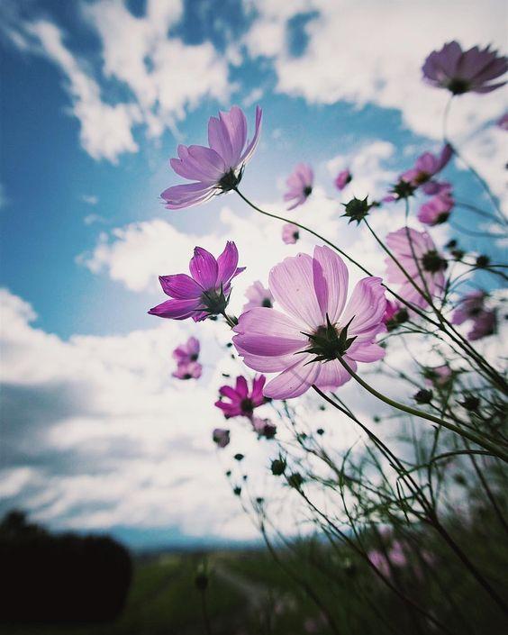 * * やっとコスモス行ってきました🙆♂️ * お花の写真新鮮( ¤̴̶̷̤̀ω¤̴̶̷̤́ )✧ * と、言うか… 日中っぽい写真がけっこー新鮮🙄w * * * --------------------------------------------------…