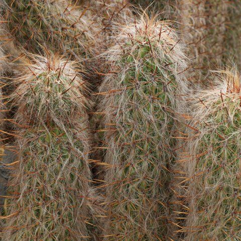 Cacti And Succulents Identification Cultivo De Suculentas