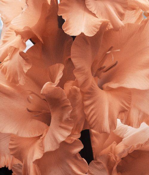 Peach Flower Petals Sickymagazine Tumblr Com Flower Petals