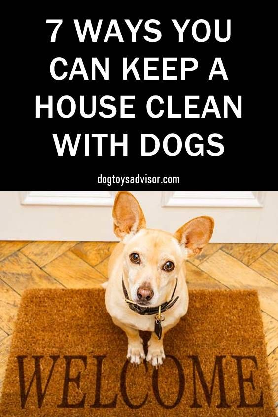 Do You Find Yourself Having To Pick Off Pet Hair From Your Clothes And Furniture All The Time Does Your House Smell Like Dog He Pets Dog Friends Dog Cleaning