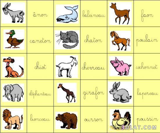 تعلمي اسماء الحيوانات و صغارها باللغة الفرنسية مع نانونا7 Comics Peanuts Comics Art