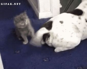 This little guy who's got a batting average of .350! (gif)