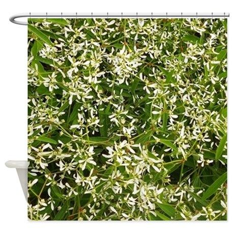 """http://www.cafepress.com/+green_and_white_shower_curtain,1376889667 Garlic plant: Green and White shower curtain  Instantly update your bathroom with a customized shower curtain that looks great and helps keep your floors dry.•Comes in one size: 69"""" x 70"""" •100% softened polyester •Standard size with 12 stitch-enforced eyelets for hanging •Shower rod, rings, or liner not included"""